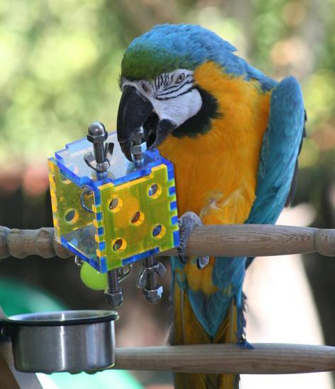 epic bird toys