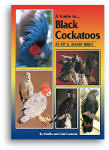 A Guide to Black Cockatoos